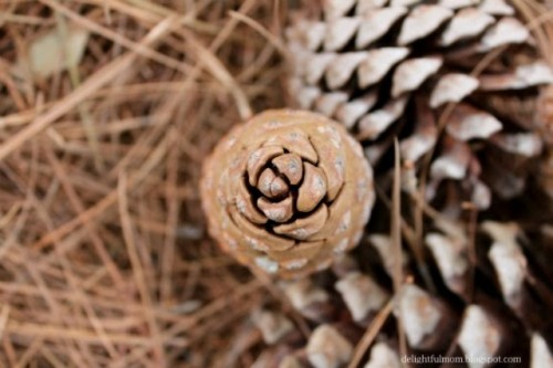 Diy Pinecone Wreath For Fall And Winter Decor