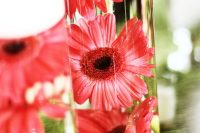 lovely pink submerged flowers in tall vases