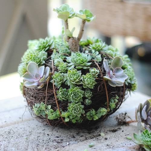 70 indoor and outdoor succulent garden ideas shelterness you can make really creative little gardens that are shaped like pumpkins via shelterness sisterspd