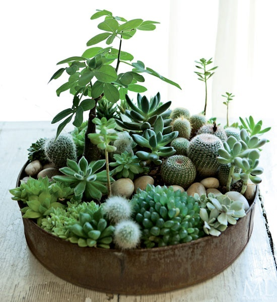Such mini gardens works well for indoors (via digsdigs)
