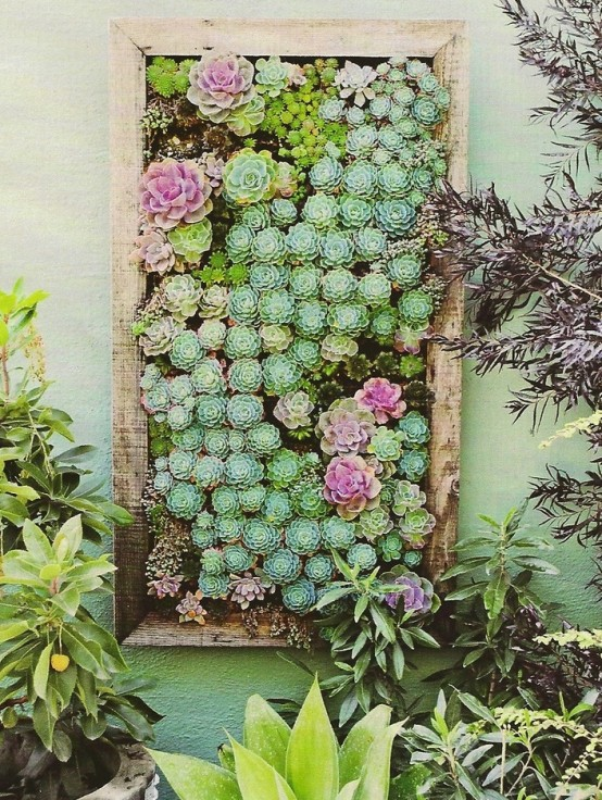 An amazing vertical succulent garden example (via digsdigs)
