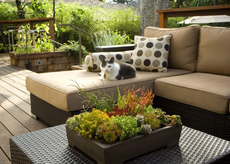 a little succulent garden in just one container could become a centerpiece of any coffee table