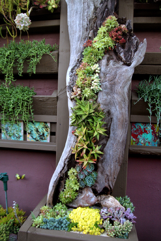 An Old Log Is A Perfect Conainer For A Really Creative Succulent Garden