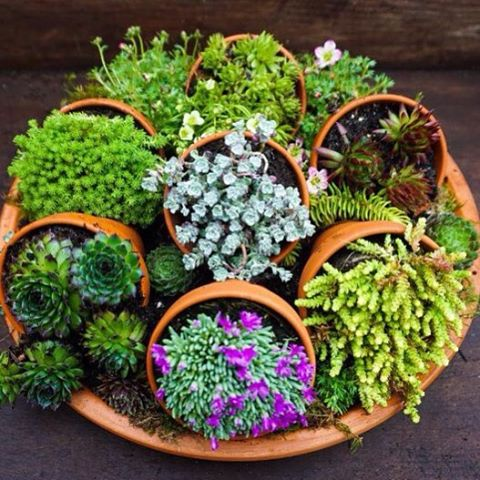 clever idea to use several small planters on their sides in one large planter