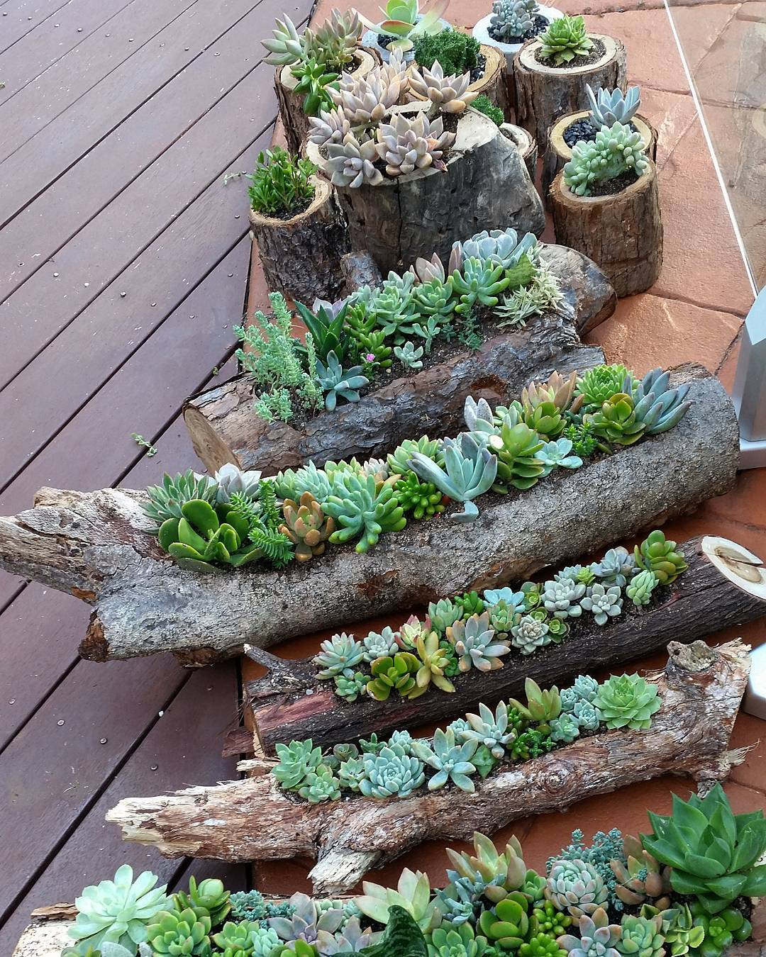 hollowed out logs and timber rounds are inexpesive containers for beautiful succulent gardens you can DIY