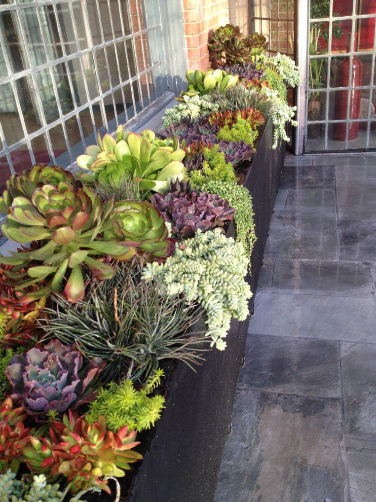 70 indoor and outdoor succulent garden ideas shelterness - Best indoor succulents ...