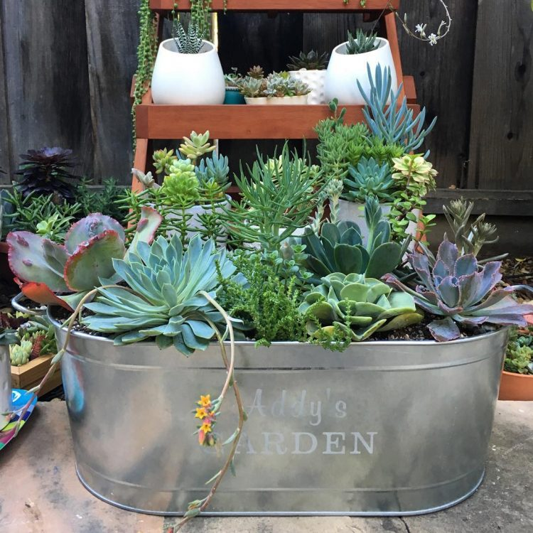 simple layred containers with a variety of succs