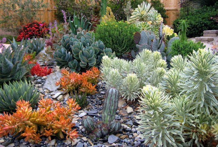 Simple Yet Really Colorful Outdoor Succulent Garden