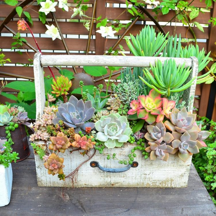 70 indoor and outdoor succulent garden ideas shelterness for Exterior garden designs