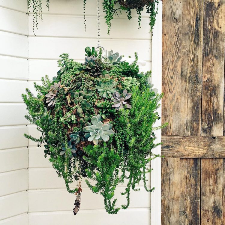 this is how a gorgeous hanging succulent garden looks like