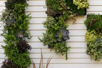 you can create a composition not only from plants but from planters too