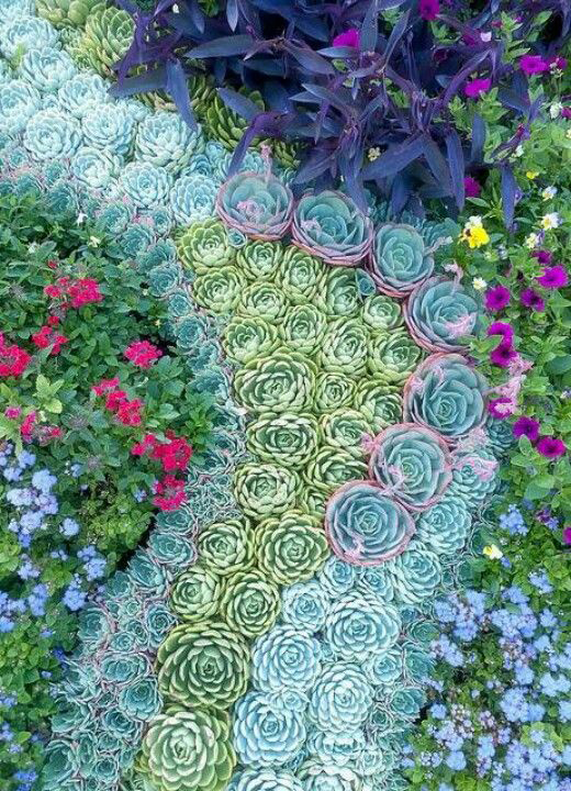 you could solve different landscape taks with succulents as effective as with other plants
