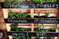If your outdoor space is limited, make a vertical herb garden from a pallet and hang it on a wall!