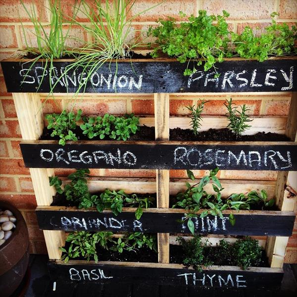 If your outdoor space is limited, make a vertical herb garden from a pallet and hang it on a wall! (via 99pallets)