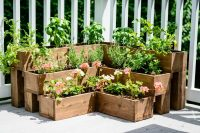 You can create a medicinal herb garden on your patio and it'd be not only practical but also beautiful.