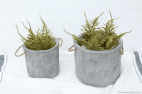 Concrete isn't an obvious material for planters but who said you can't use it?