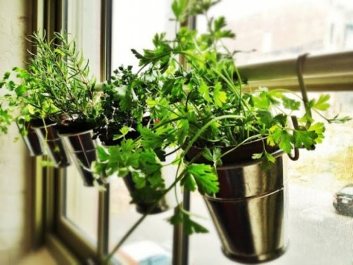 If space is at a premium, don't forget you can use your windows to grow some herbs for your cooking. (via shelterness)