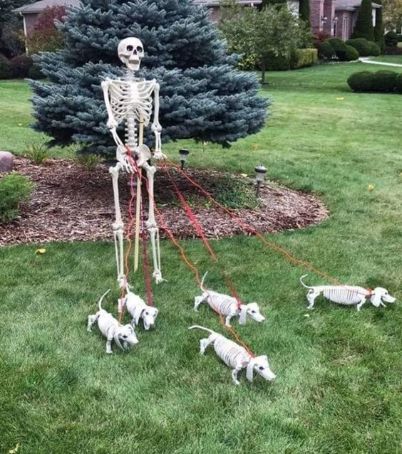 a skeleton walking his skeleton dogs is a funny idea to recreate in your backyard for Halloween