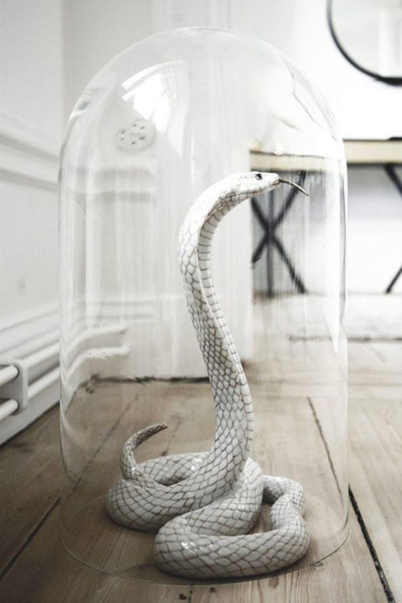 a white snake in a cloche is an elegant and scary Halloween decoration you can make