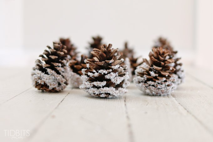 snow covered pinecones (via tidbits-cami)