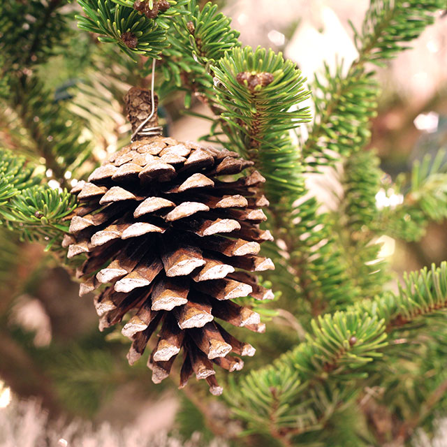 frosted pinecone ornaments (via wecanmakeanything)