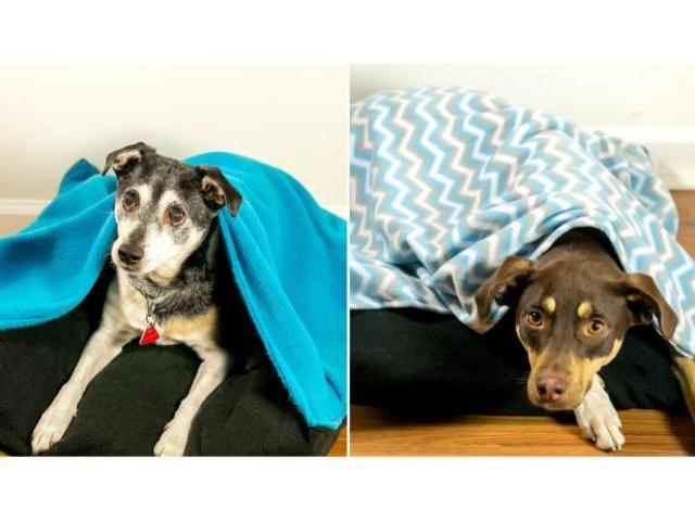 DIY Snuggle Pet Bed For Blanket Lovers