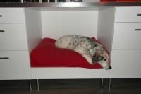 DIY Faktum kitchen dog bed
