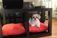 DIY Lack table and dog bed