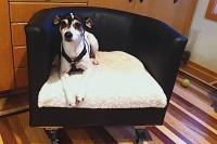 DIY rolling dog bed