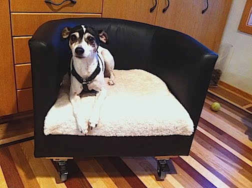 DIY rolling dog bed (via ikeahackers)