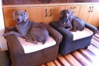 DIY ottoman dog beds