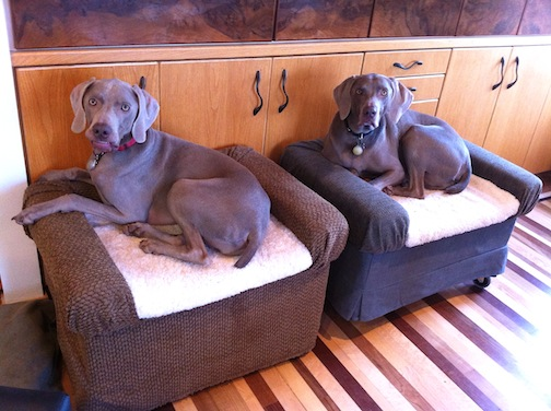 DIY ottoman dog beds (via ikeahackers)