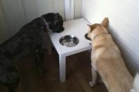 DIY Lack dog diner