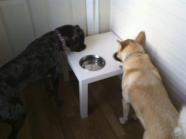 DIY Lack dog diner (via ikeahackers)