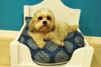 DIY Lack table dog bed hack