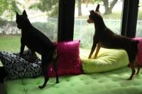 DIY Malm dog seat