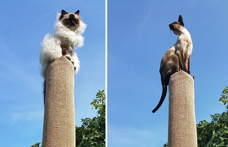 DIY cat climber (via ikeahackers)
