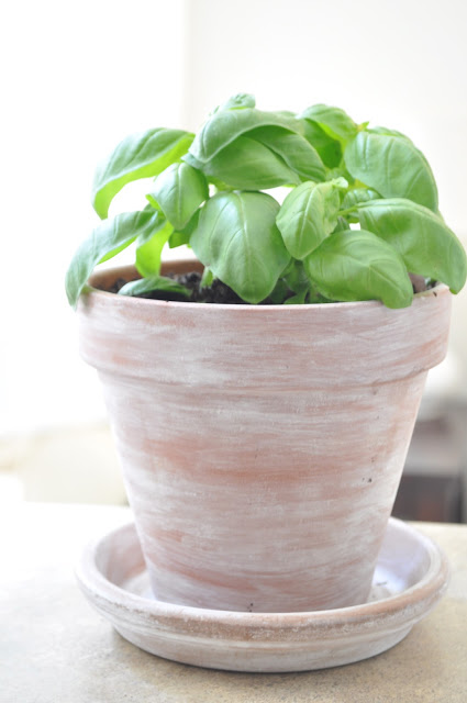 DIY whitewashed terra cotta pots (via oliveandgray)