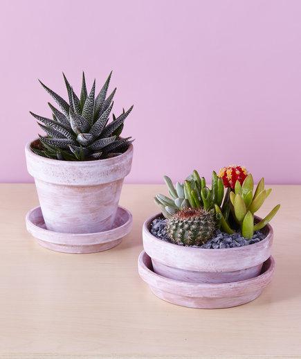 DIY aged whitewashed pots