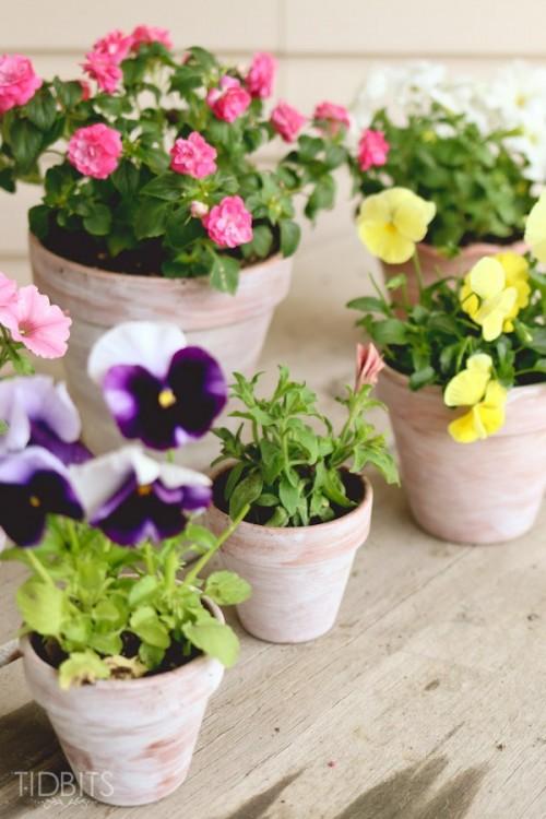 DIY shabby whitewashed pots (via gardenoholic)