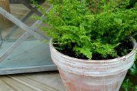DIY distressed white wash pots