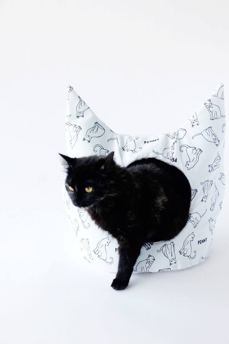 Picture Of diy personalized cat dig with cute ears  4
