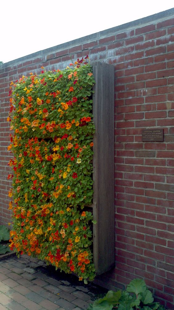 vertical floral garden on the roof
