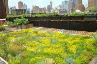 07 rooftop lawn garden