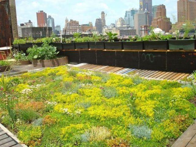 rooftop lawn garden