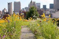 09 wildflower urban garden on the rooftop