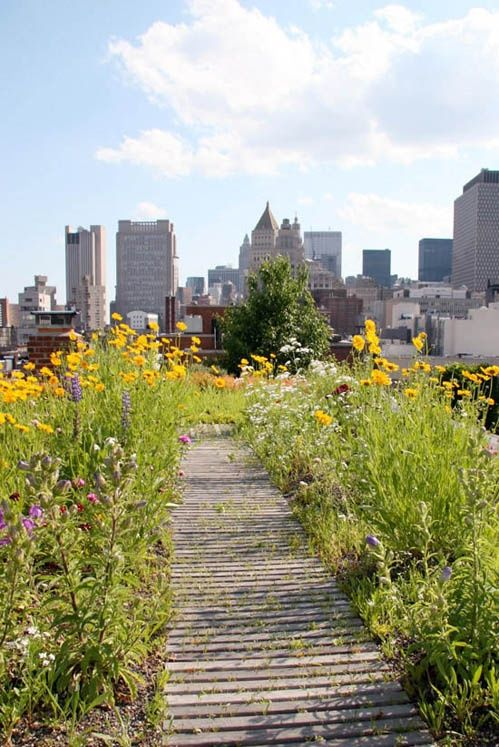 wildflower urban garden on the rooftop