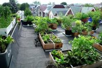 11 edible landscaping on the rooftop