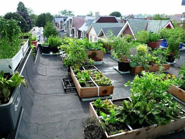 edible landscaping on the rooftop
