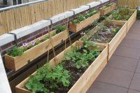 12 veggie container rooftop garden